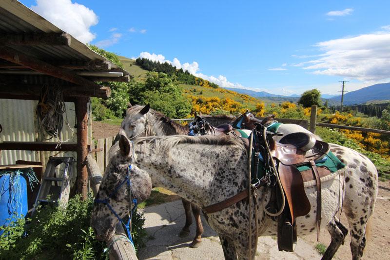 Back country saddle