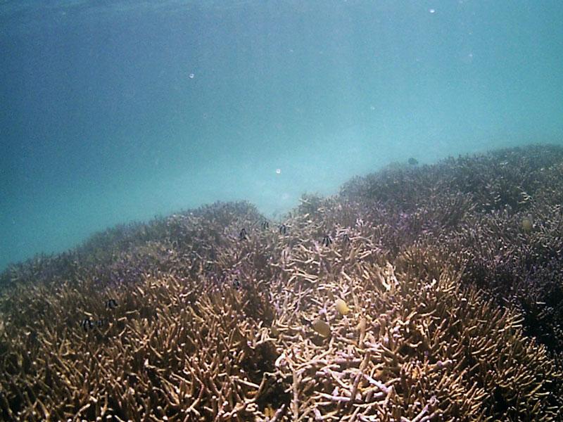 Kaputte Korallen vom Motorboot
