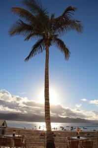 Unter der Palme von Las Palmas
